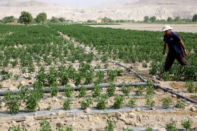 Image: Jordanian farmer Sameer Mahadin