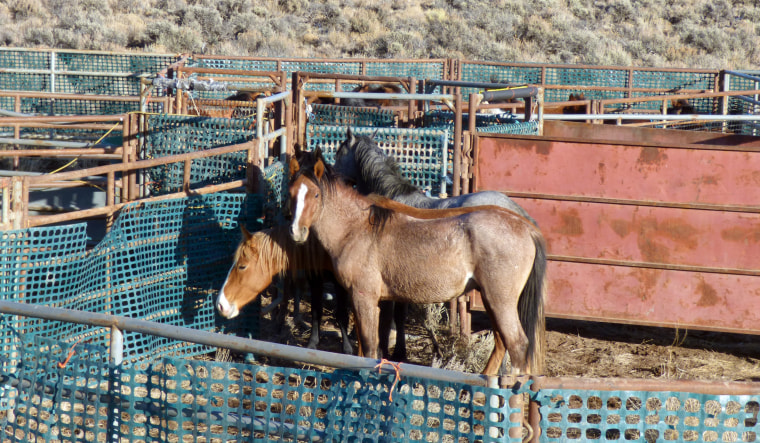 Image: Wild horses Oregon