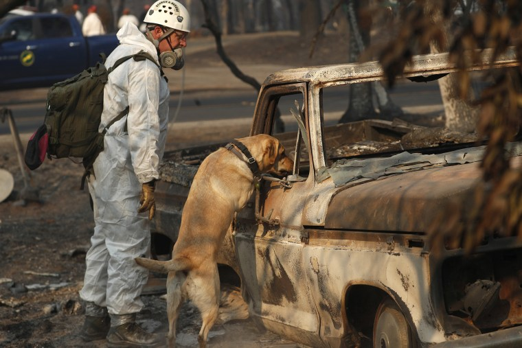 Image: Search Dog Camp Fire Aftermath