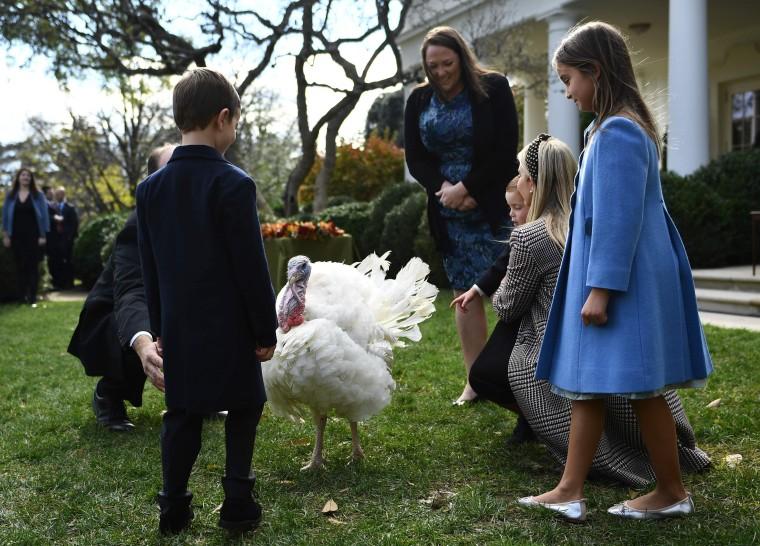 Image: US-POLITICS-THANKSGIVING-TURKEYS