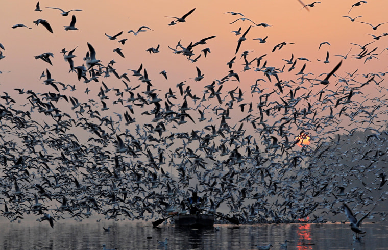 Image: A man rides a boat as seagulls fly over the waters of the river Yamuna early morning in New Delhi