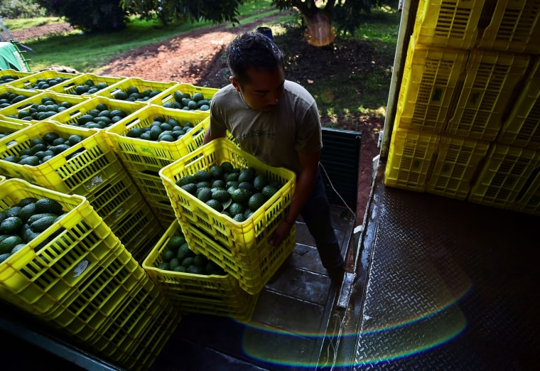 A farmer loads boxes of avocados onto a truck in Uruapan, Mexico, on Oct. 19, 2016.