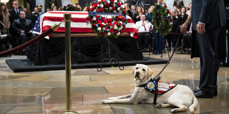 Sully the dog at U.S. Capitol to pay respects to late President George H.W. Bush