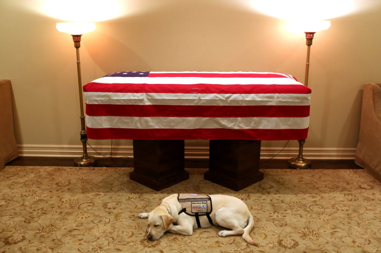 Image: Sully the service dog of former U.S. President George H.W. Bush in his final months lays in front of Bush's casket at the funeral home in Houston