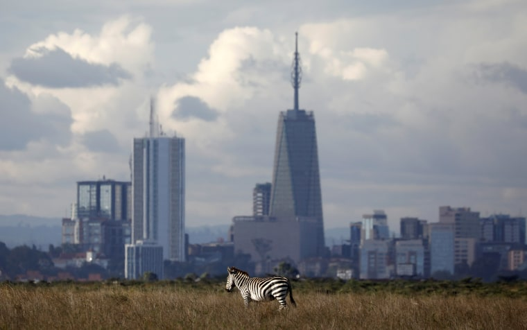 Image: The Nairobi skyline is seen in the background as a zebra walks through the Nairobi National Park, near Nairobi