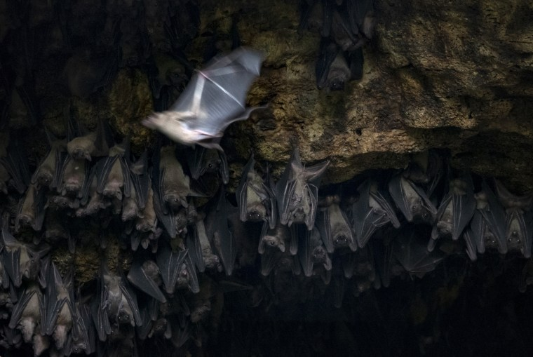 Image: Bats congregate in the Bat Cave in Queen Elizabeth National Park in Uganda on August 24, 2018.