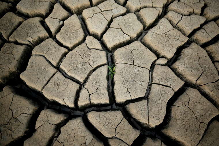 Image: A plant grows between cracked mud at the Theewaterskloof dam near Cape Town, South Africa, on Jan. 21, 2018.
