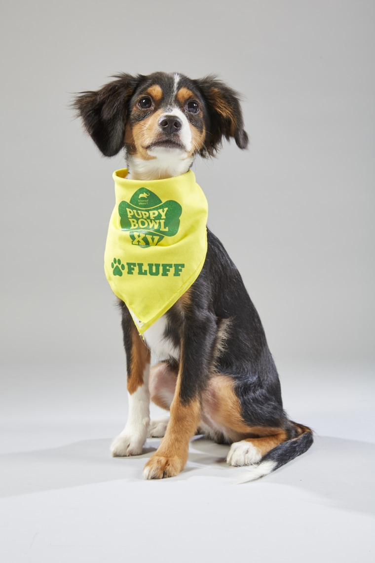 Meet the 2019 Puppy Bowl starting lineup! - photo#13