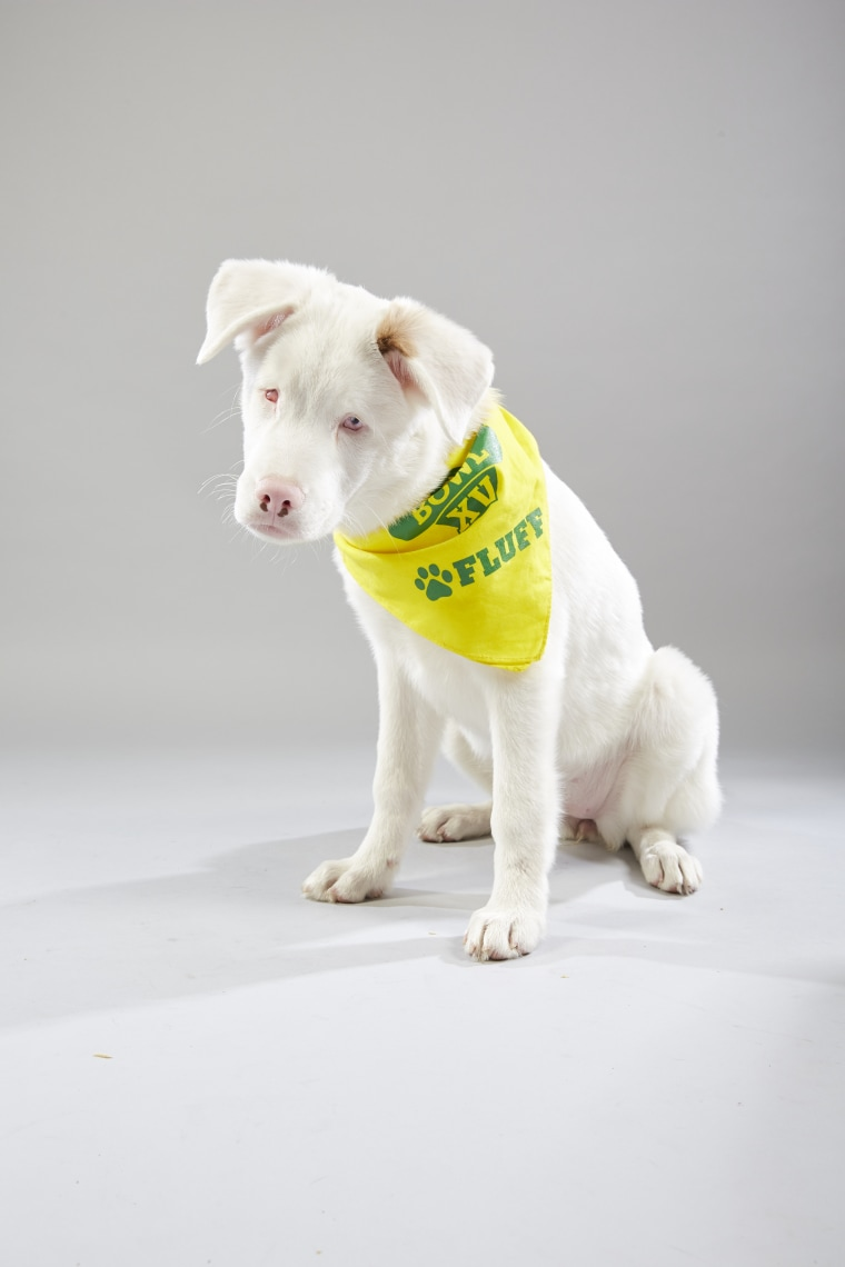 Meet the 2019 Puppy Bowl starting lineup! - photo#17