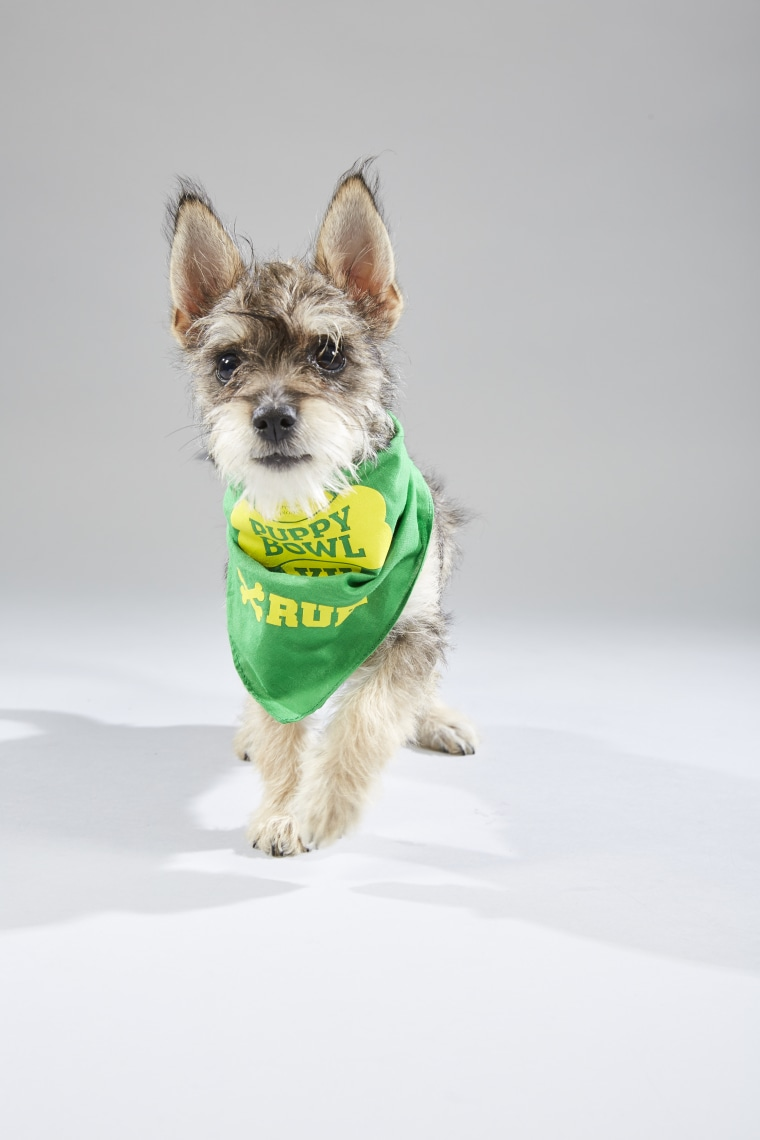 Meet the 2019 Puppy Bowl starting lineup! - photo#19