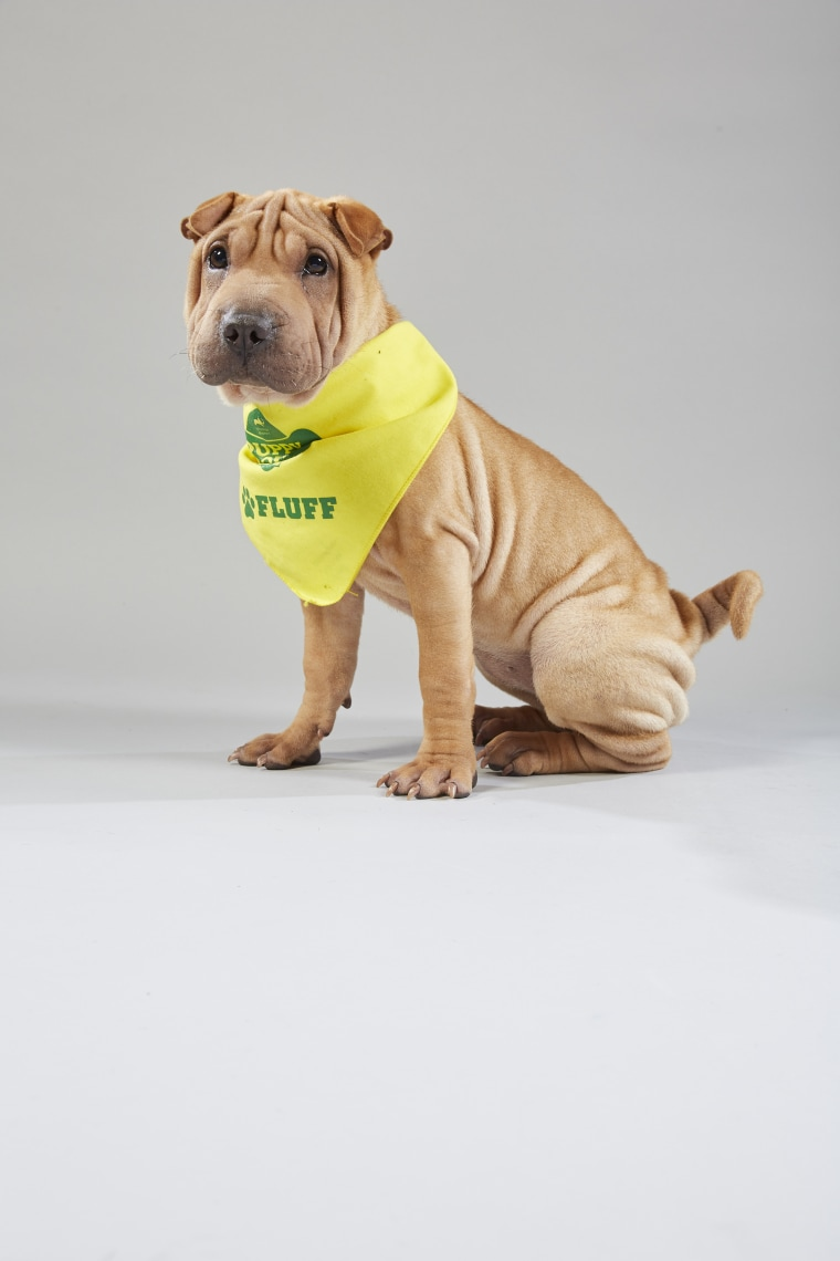 Meet the 2019 Puppy Bowl starting lineup! - photo#18