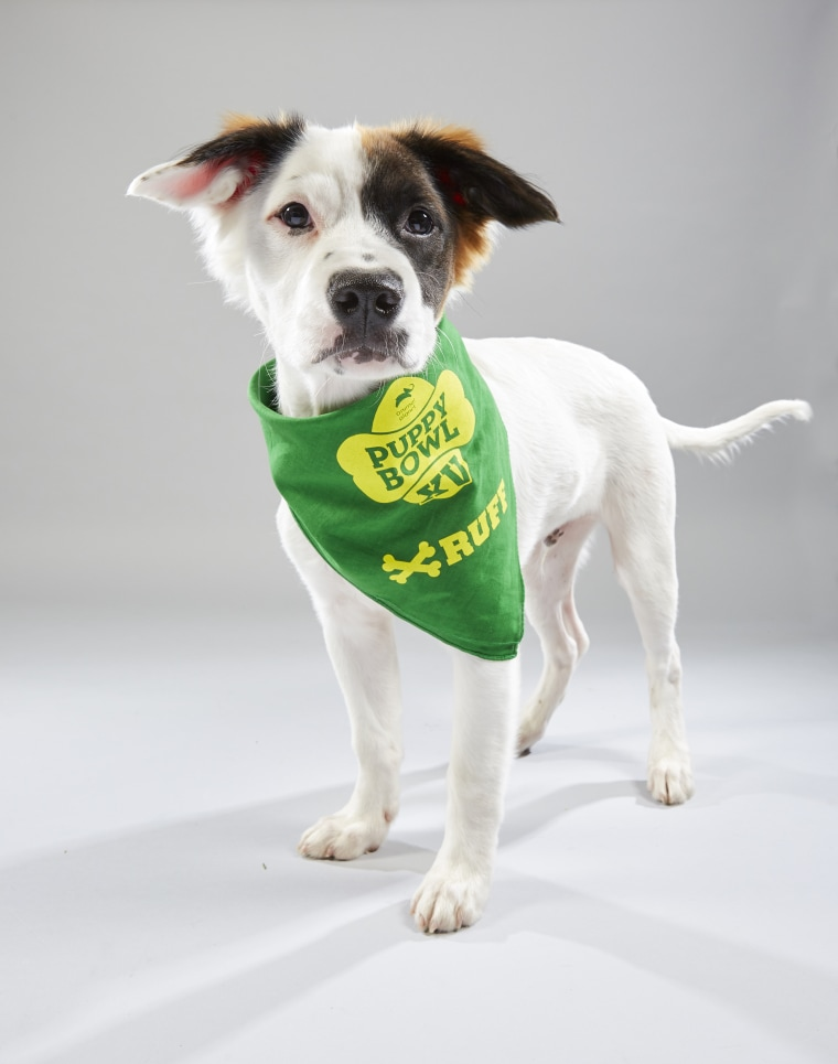 Meet the 2019 Puppy Bowl starting lineup! - photo#12