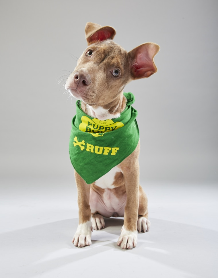 Meet the 2019 Puppy Bowl starting lineup! - photo#5