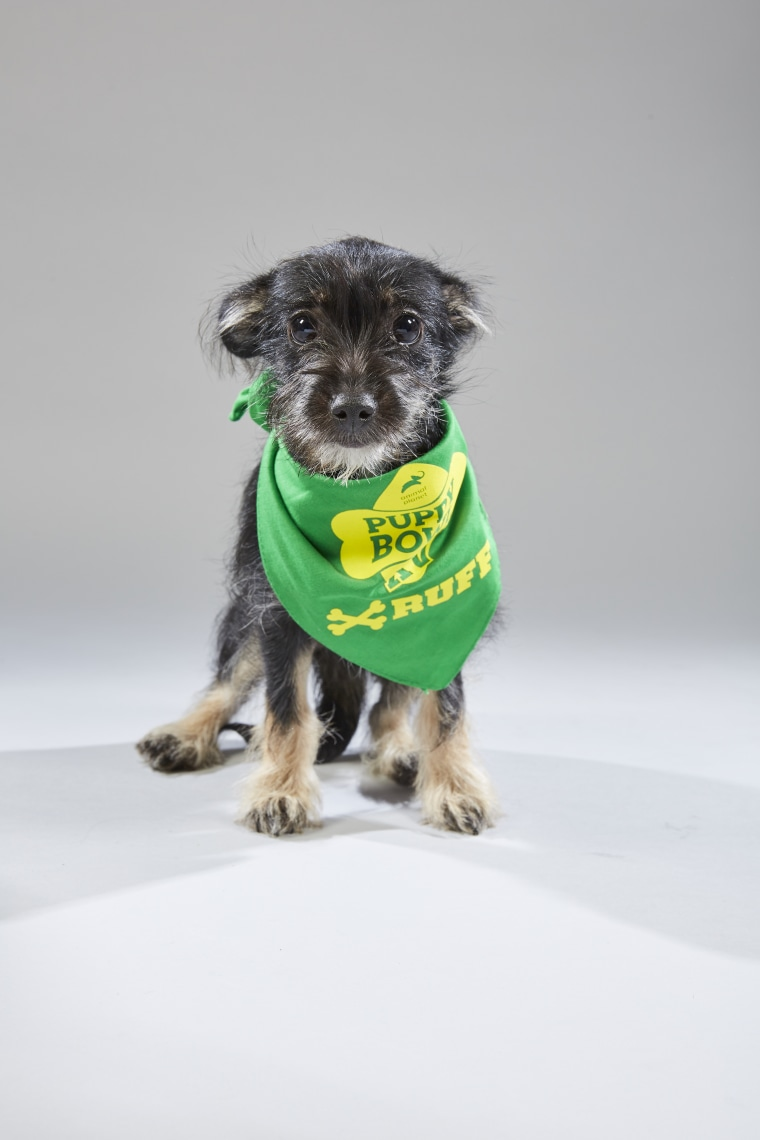 Meet the 2019 Puppy Bowl starting lineup! - photo#23