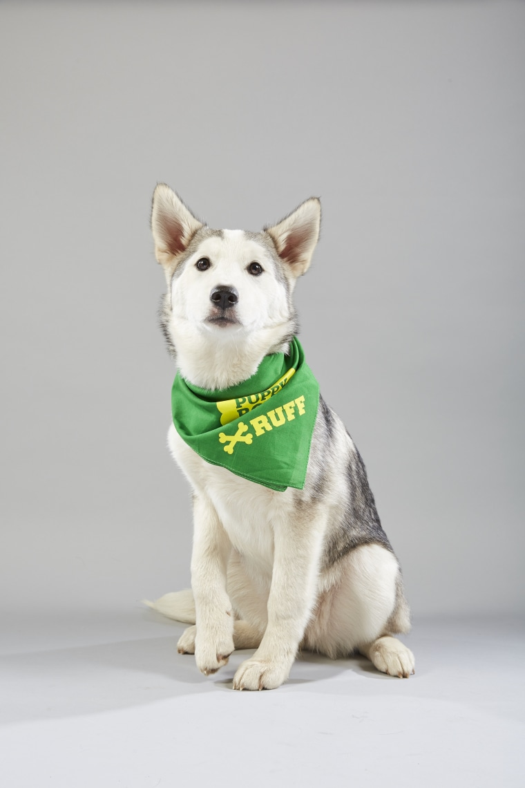 Meet the 2019 Puppy Bowl starting lineup! - photo#21