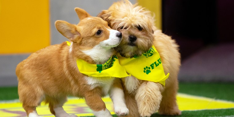 Animal Planet's Puppy Bowl 15