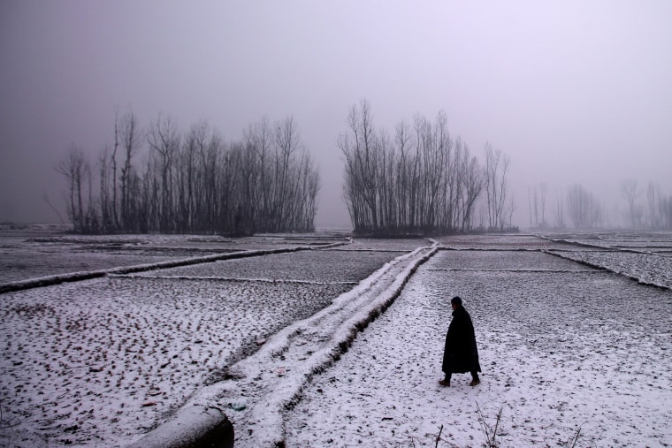 Image: A man walks through a paddy field during snowfall on a cold winter morning in Pattan