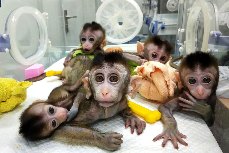 Image: CHINA-GENETICS-SCIENCE-CLONING-ETHICS