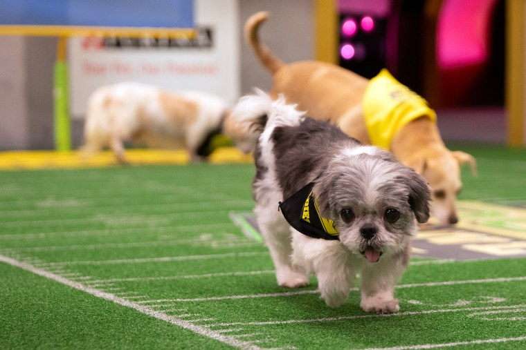 """Dogs take to the field in """"Dog Bowl II"""""""