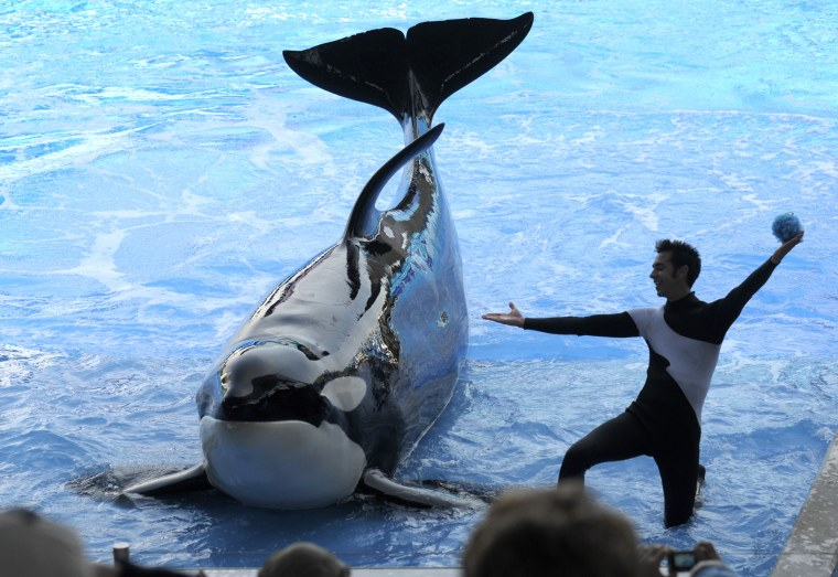 Trainer Joe Sanchez works with Kayla during the Believe show at the SeaWorld Orlando theme park