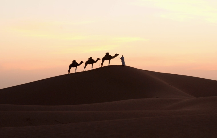 Image: A man walks with camels in the southern Sahara desert in Morocco on March 16, 2014.