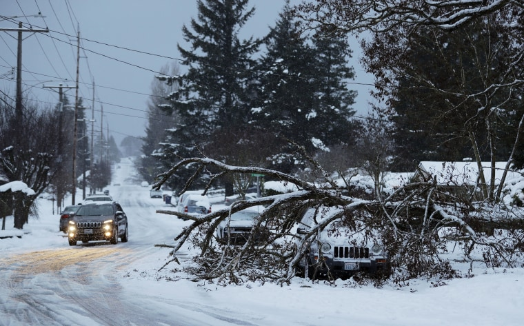 Image: A tree rests on a vehicle on a residential street in Tacoma, Washington