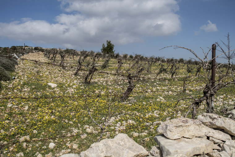 Image: Palestinian farm land appropriated for Efrat settlement