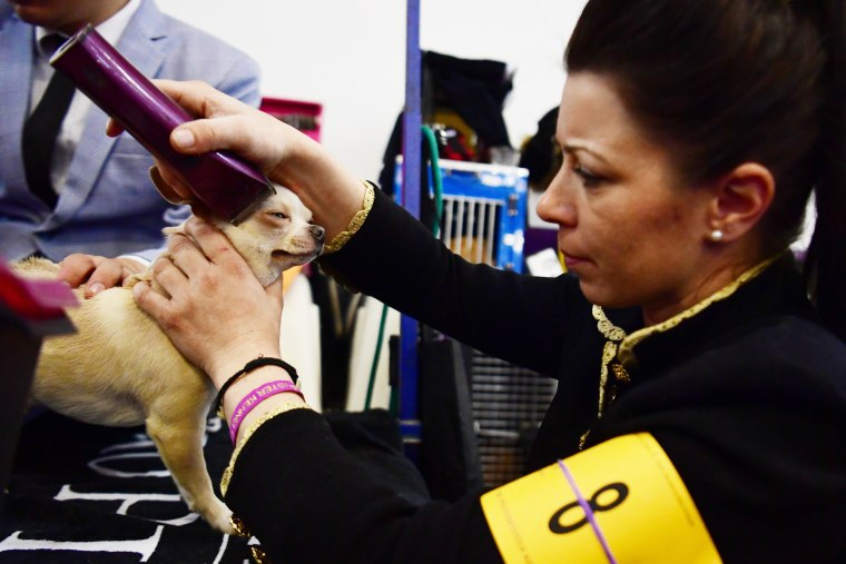 Image: Westminster Kennel Club Hosts Its Annual Dog Show In New York