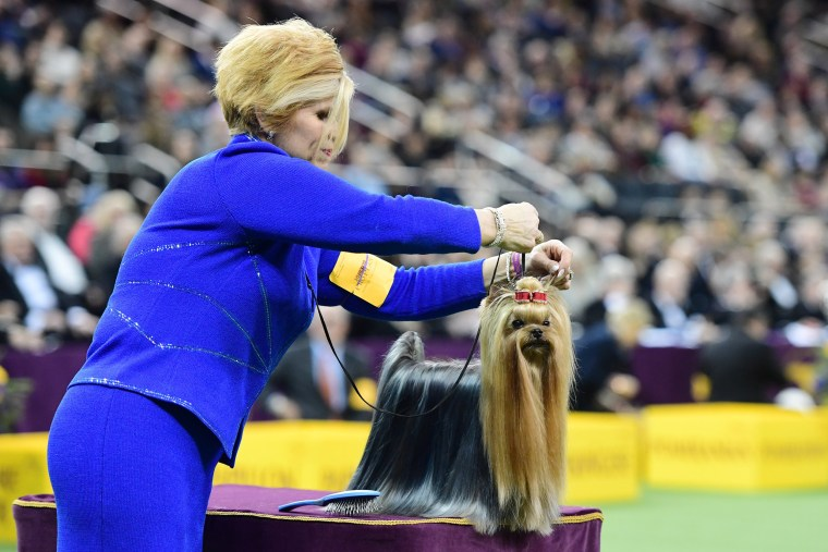 Image: ***BESTPIX*** Westminster Kennel Club Hosts Its Annual Dog Show In New York