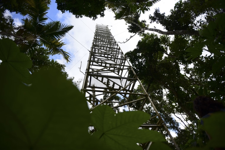 Image: An access tower overlooking the El Yunque tropical rain forest in Puerto Rico on Feb. 13, 2019.