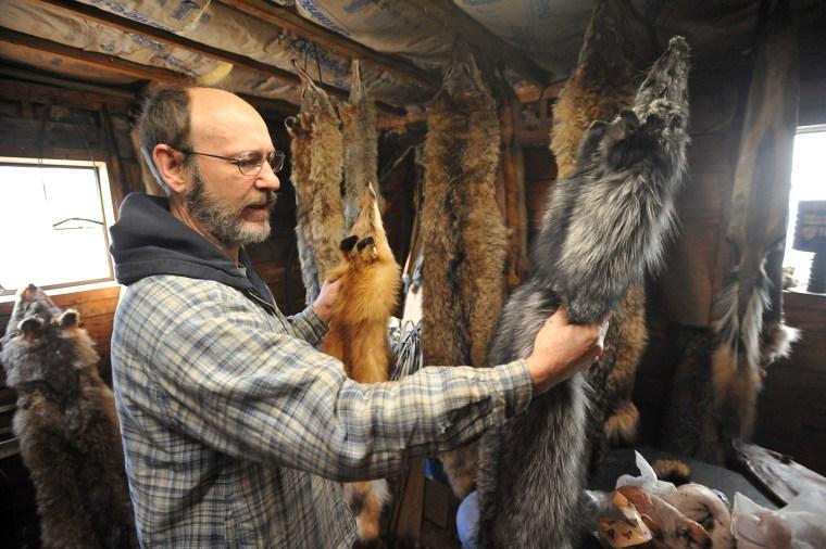 Image: Coyote fur