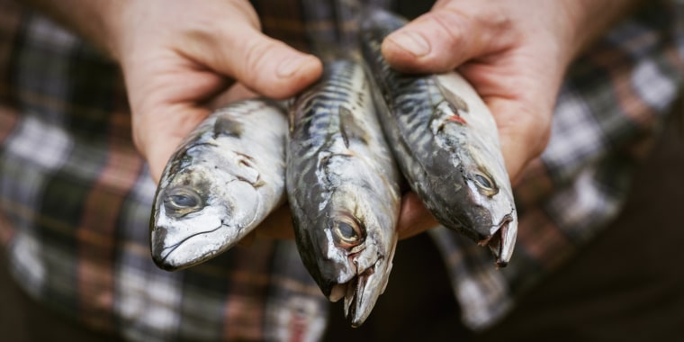 rise of alternative fish species in everyday restaurants