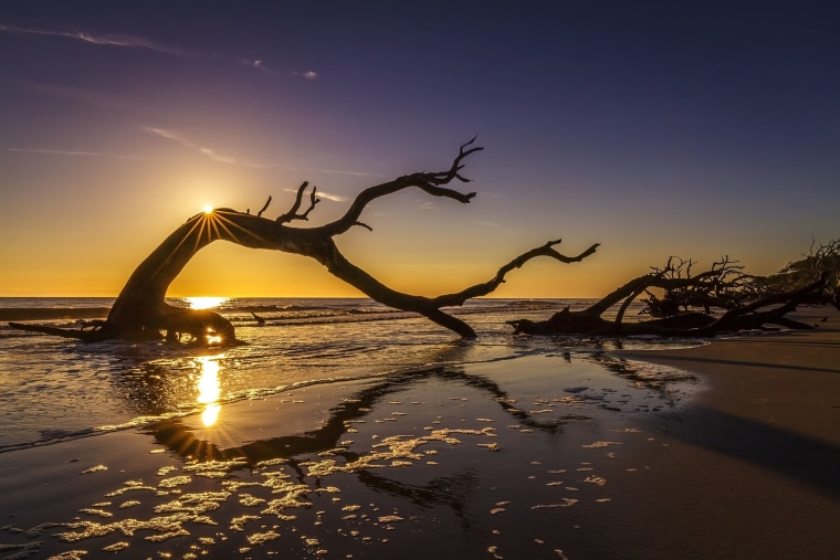 Sunrise Over Driftwood Beach - Jekyll Island