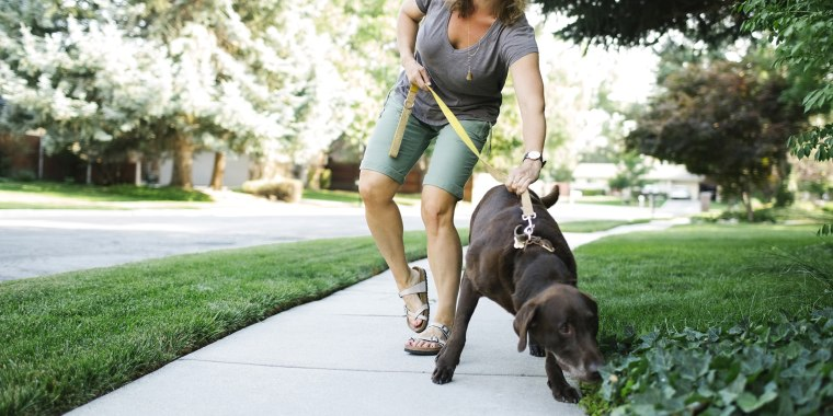 Woman walking with Labrador Retriever