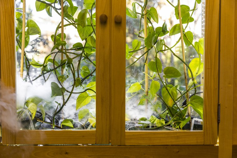 Image: For plants in the home to be able to effectively remove hazardous molecules from the air, they would also need to be inside an enclosure with something to move air past their leaves, like a fan.