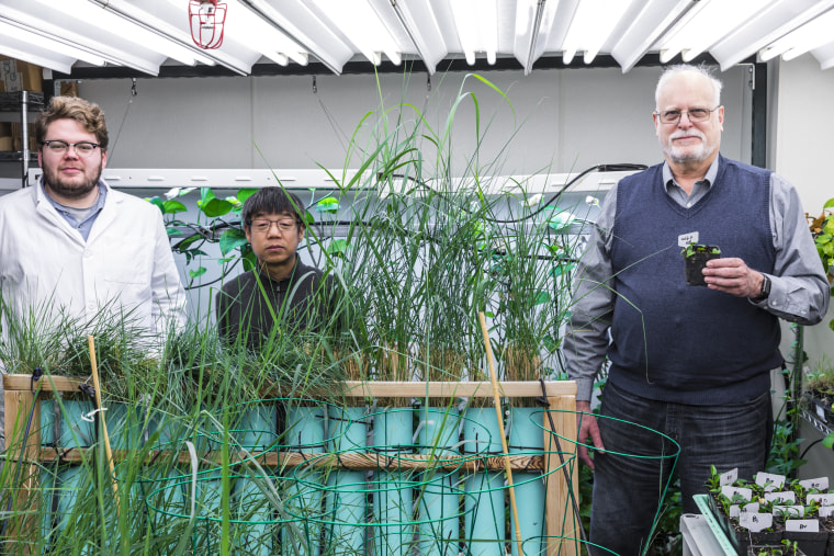 Image: The team behind the modified houseplants: Ryan Routsong, Long Zhang and Stuart Strand.