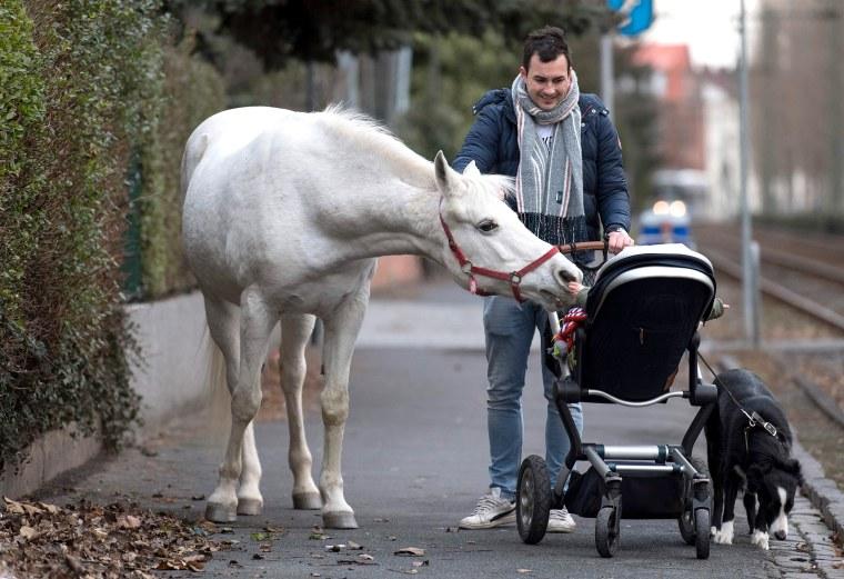 Image: GERMANY-ANIMALS-HORSE-OFFBEAT