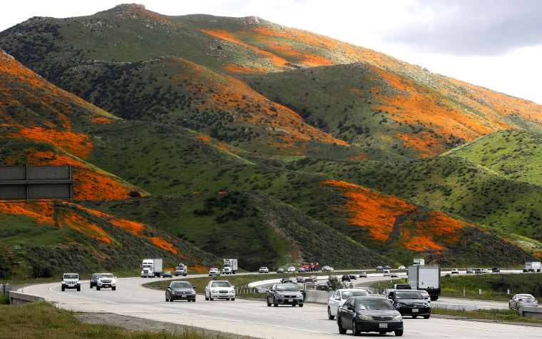 Image: Wet Winter Weather Brings 'Super Bloom' Of Wildflowers To California