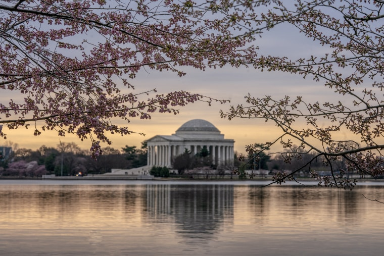 With the peak bloom only a couple of days away, the Jefferson Memorial is framed amid the emerging cherry blossoms along the Tidal Basin in Washington on Friday, March 29, 2019.