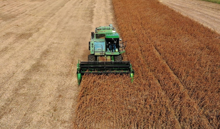 Soybean Harvested In Maryland