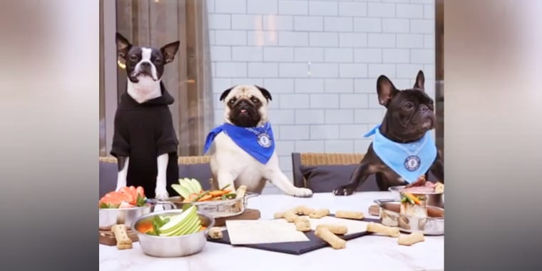 Pet-friendly restaurant offers $40 steak for your dog
