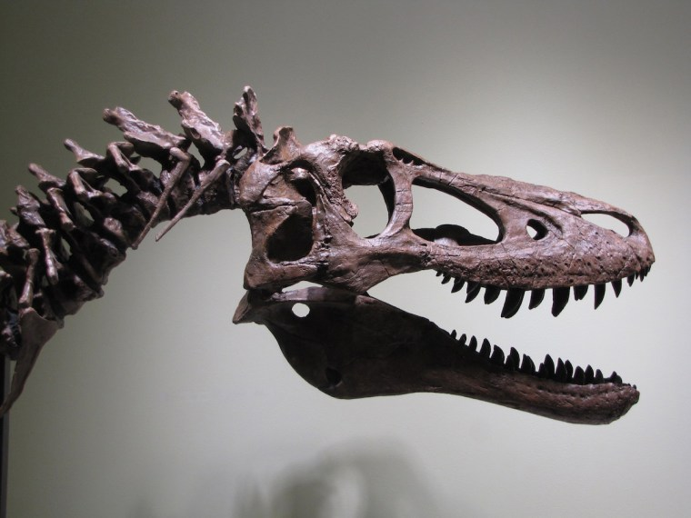 A fossil of a baby Tyrannosaurus Rex that Alan Detrich listed on eBay just under $3 million.