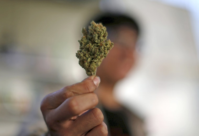 Image: File photo of a volunteer holding a dried cannabis bud at the La Brea Collective medical marijuana dispensary in Los Angeles