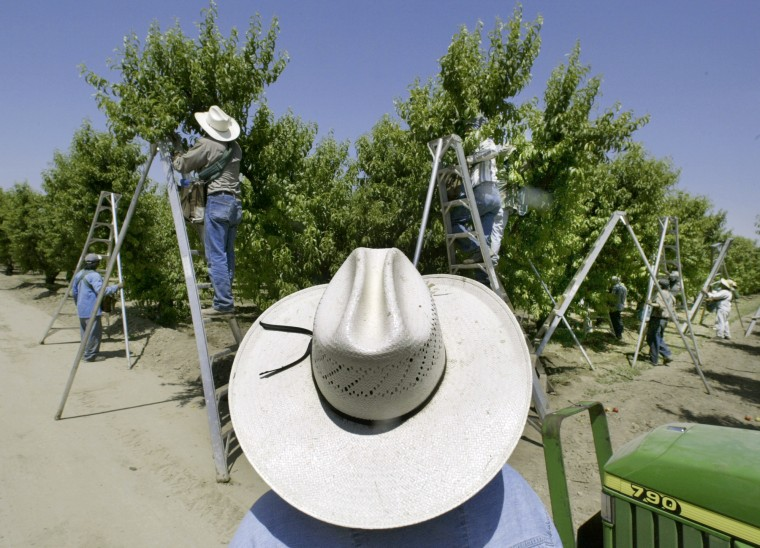 Image: A foreman watches workers pick fruit in an Orchard in Arvin, California, in 2004.