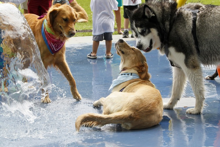 The mistakes people make at the dog park that put their pet at risk