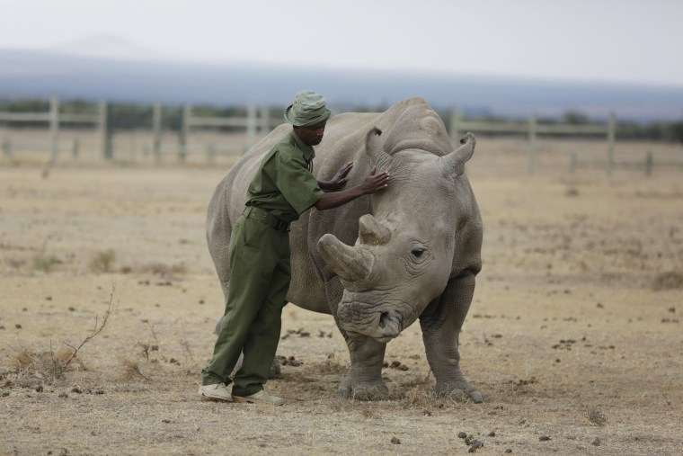 New Research Finds Animals May Help >> 1 Million Species Under Threat Of Extinction Because Of Humans