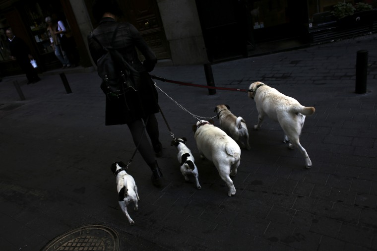 Image: A woman walks her dogs in Madrid in 2013.