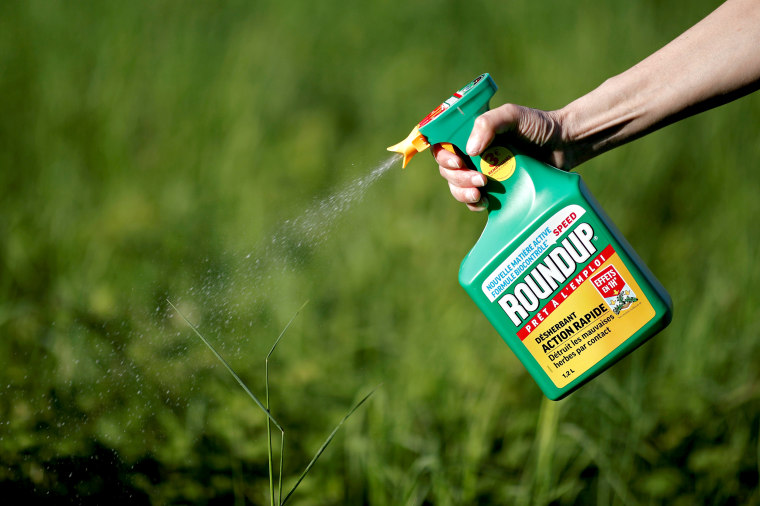 Image: FILE PHOTO: A woman uses a Monsanto's Roundup weedkiller spray without glyphosate in a garden in Ercuis near Paris