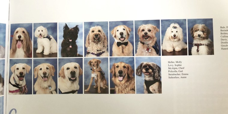 1 year after shooting at Parkland, Florida, school, therapy dogs honored in Marjory Stoneman Douglas yearbook