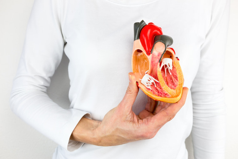 Image: Female Hand holds human heart model at body